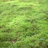今年のゴールデンウィークは庭を緑にしようかと思う