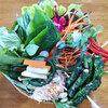 バンコクで美味しい野菜が食べられるお店3選