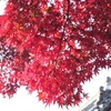 八坂神社の紅葉②観光46...20191201京都