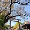 伊勢山皇大神宮の桜見てきた2021!