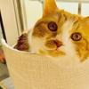 猫の瞳の住人