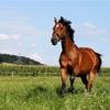 【重賞予想】優駿牝馬(オークス) 2020 予想 〜無敗の2冠馬誕生か⁉︎阻止する馬が現れるのか⁉︎〜