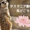 タスマニア動物園の見どころをご紹介。近くのおすすめホテルの情報も。