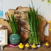 5月のゴールデンウィークは菖蒲風呂!