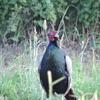 野鳥撮影日記(令和3年8月①)