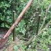 「なつめの木」修復完了。