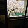桜が好き過ぎる