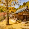 京都・亀岡 - 黄葉に染まる千手寺