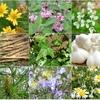 9種類の植物由来エキス&17種類のアミノ酸とシルク配合シャンプー