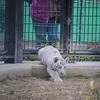 平川動物公園に行ってきました vol.01
