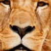 【vsライオンズ 2019初戦】ライオンの前ではイーグルスの投手陣がまるで草食動物のようでした...。
