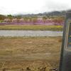 立谷川に芝桜を見に行った