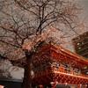 本日の神田明神の桜