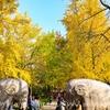 中国で秋の写真撮影、高速鉄道で南京旅行(2)鐘山風景区、明孝陵
