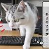 猫雑記 ~すずめのお願い~