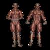 見た目がかっこよく筋肉が浮き出てくるにはどれくらい痩せればいいのか