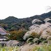 【紅葉偵察】秋の嵐山【まだ様子見】