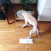 毛と臭いとの仁義なき戦い、犬と暮らす家の床掃除事情