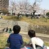 夙川で花見2019