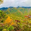 紅葉を愛でる文化は日本人独特のもの… それでも綺麗な所には大勢の人が集まります… 週末はグレートスモーキーマウンテン国立公園に紅葉狩りに行って来ました。