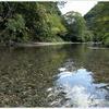 【夏の思い出】大好きな日本の川。澄んだ水ときれいな空気に癒されて。