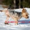 【犬と猫の膀胱炎】絶対知っておくべき膀胱炎のサインと対処法とは?