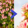 【初心者でも簡単】一眼レフカメラで花を綺麗に撮影するコツ|オススメ撮影テクニック