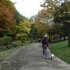 ☆11月のお散歩
