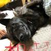 台風10号と甲斐犬サンの過ごした方(多分)〜\\\└('ω')┘////多分テ何ヤノン?〜