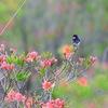高原の小鳥