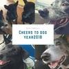 Akemashite Omedetou あけましておめでとう!3頭の犬と暮らした思い出のブログを書くことにします!