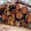 カンボジアベトナムの政府関係者の大規模木材密輸贈収賄事件