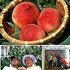 果点を探せ!『あさイチ』の「桃」特集で美味しい実の選び方・冷やし方・食べ方などが分かりました