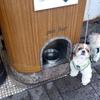 犬に優しいペットバーがある街!横浜・元町商店街をお散歩!