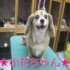 トリミング犬ご紹介  100枚(名前入り)
