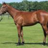 シルク15年産一口初心者全馬評価26 オルゲイユの15
