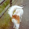 お散歩中の犬の排泄に関する観察。ハート型とダイヤ型。