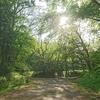 青葉城址へ散歩 巽門から本丸跡 中善並木へ