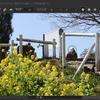 SILKYPIX)写真に映り込んでしまった人物やゴミなどを除去。スポッティングツールを使う。写真部分修正。