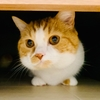 お耳掃除にビビりまくる俺様猫。