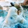 満足度は旭山動物園を超えた!? 静岡の日本平動物園とは?アクセス情報も