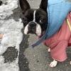 結局のところ犬は雪が好き?