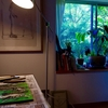 七月の窓辺とジャコメッティのリトグラフとやりかけの木版と