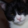 今日の黒猫モモ&白黒猫ナナの動画ー603