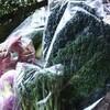 畑のGOCHISOから本日のお野菜をお知らせいたします