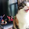 【愛猫日記】毎日アンヌさん#218