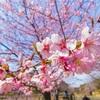 少し春を先取りしてきました!|昭和記念公園で写真を撮ってきた