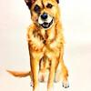 いろいろな犬を描く 6