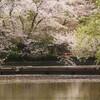 鎌倉🌸桜とあなたとレベル3(注:あなた=穴他)