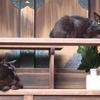 似て非なる黒猫の姉妹